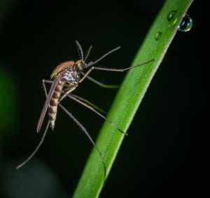 brown and black mosquito on green stem macro photography